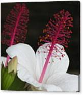 Hawaii Flower Canvas Print