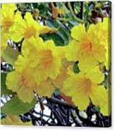 Hawaii Gold Tree Canvas Print