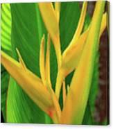 Hawaii Golden Torch Canvas Print