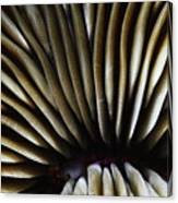 Hawaii Mushroom Coral Canvas Print