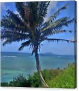 Hawaii Palm Canvas Print