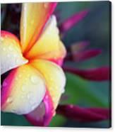 Hawaii Plumeria Flower Jewels Canvas Print