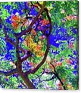 Hawaii Shower Tree Flowers In Abstract Canvas Print