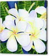 Hawaii Tropical Plumeria Flower  #208 Canvas Print
