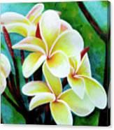 Hawaii Tropical Plumeria Flower #225 Canvas Print