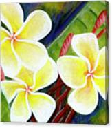 Hawaii Tropical Plumeria Flower #298, Canvas Print