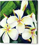Hawaii Tropical Plumeria Flowers #160 Canvas Print
