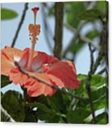 Hawaiian Beauty Canvas Print