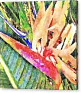Hawaiian Bird of Paradise Canvas Print