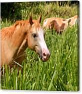 Hawaiian Horses In Sugar Cane Canvas Print