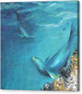 Hawaiian Monk Seals Canvas Print