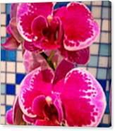 Hawaiian Orchid 1 Canvas Print