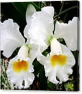 Hawaiian Orchid 35 Canvas Print