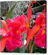 Hawaiian Orchid 37 Canvas Print