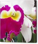 Hawaiian Orchid 4 Canvas Print