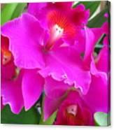 Hawaiian Orchid 8 Canvas Print