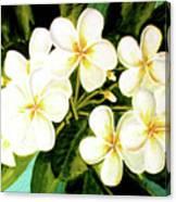 Hawaiian Plumeria #56 Canvas Print