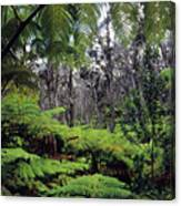 Hawaiian Rainforest Canvas Print