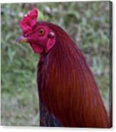 Hawaiian Rooster Canvas Print