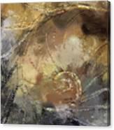 Hawaiian Sea Shell Canvas Print