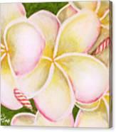 Hawaiian Tropical Plumeria Flower #483 Canvas Print