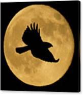Hawk Flying By Full Moon Canvas Print