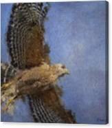 Hawk In Flight Canvas Print
