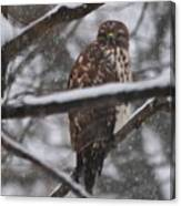 Hawk In Snow Storm Canvas Print