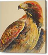 Hawk Messenger Canvas Print