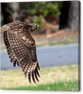 Hawk On The Fly Canvas Print