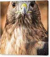 Hawk Eyes Canvas Print