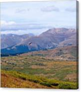 Hawk Soaring Over Guanella Pass In The Arapahoe National Forest Canvas Print