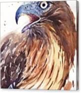 Hawk Watercolor Canvas Print