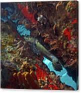 Hawksbill Sea Turtle 9 Canvas Print