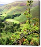 Hawthorn Branch With View To Wicklow Hills. Ireland Canvas Print