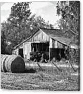 Hay And The Old Barn - Bw Canvas Print