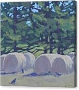 Hay Bales And Crows Canvas Print
