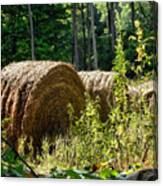 Hay Bay Rolls Canvas Print