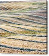 Hay Billows II Canvas Print