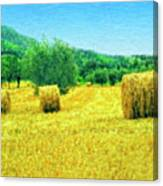 Hay Harvest In Tuscany Canvas Print