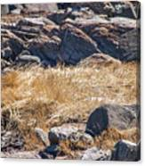 Hay Ocean Rocks Canvas Print