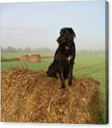 Hay There Black Dog Canvas Print