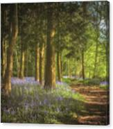 Hay Wood Bluebells 3 Canvas Print