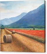 Haybales In Italy Canvas Print