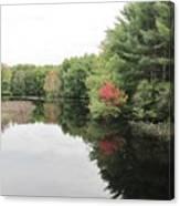 Haybrook Maine Foliage 6 Canvas Print