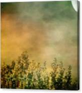 Haze On Moonlit Meadow Canvas Print