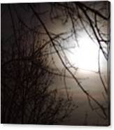 Hazy Moon Through The Trees Canvas Print