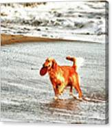 hd 342 Frisbee Dog hdr Canvas Print