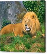 He Lion Canvas Print