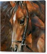 Head Horse Canvas Print